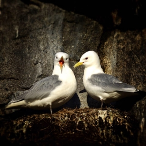 Fotokurs i Ålesund – lær å utnytte kameraet ditt bedre! ©Bjørn Joachimsen