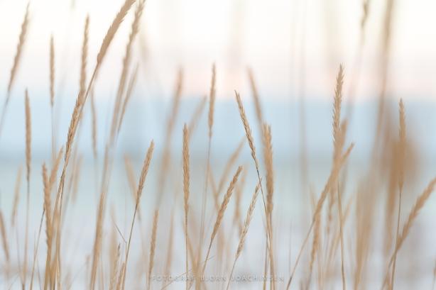 Sandøya. ©Bjørn Joachimsen