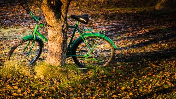Fotokurs i Vestfold: Oppdag Veierland med kamera. ©Bjørn Joachimsen.